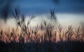 Picture field, grass, macro, sunset, the evening, Autumn, blur