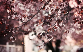 Picture leaves, trees, flowers, background, tree, Wallpaper, wallpaper, flowers, widescreen, flowers, leaves, background, leaves, full screen, …