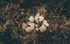 Picture broken, egg, vegetation