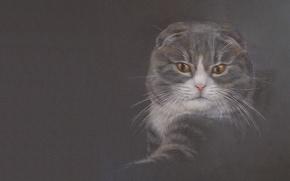 Picture cat, mood, figure, art