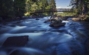 Picture forest, river, national Park, Ontario, Rushing River Provincial Park