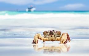 Picture sand, sea, beach, crab, claws