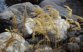 Picture autumn, macro, stones, dry grass