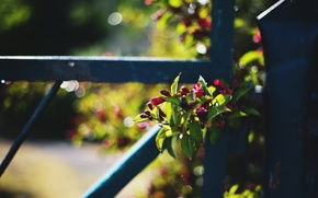 Picture macro, flowers, the fence