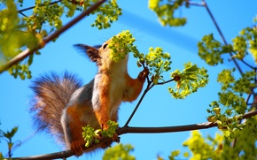 Picture the sky, leaves, branch, Tree, protein, tail, fur