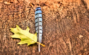 Picture macro, nature, sheet, pen, stump