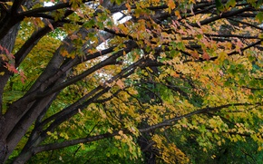 Picture Autumn, Trees, Leaves, Branch, Fall, Autumn, Colors, Trees, Leaves