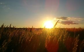 Picture landscape, sunset, Russian field