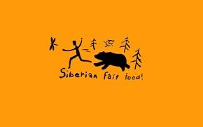 Picture bear, fast food, Siberia