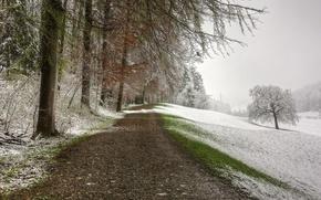 Picture road, snow, landscape, nature