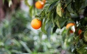 Picture leaves, orange, green, orange