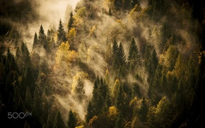 Picture autumn, forest, light, nature, fog
