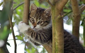 Picture branches, kitty, on the tree