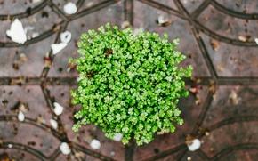 Wallpaper petals, green, plants
