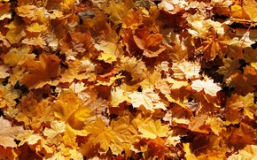 Picture leaves, carpet, gold, falling leaves