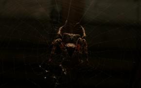 Picture spider, dark, macro, spider web