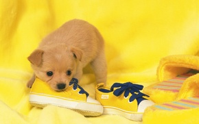 Wallpaper dog, shoes, puppy, puppy, shoes, dog