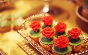 Picture cream, sweet, tray, cupcakes, decoration rose