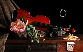 Picture flower, photo, violin, matches, the camera, fabric