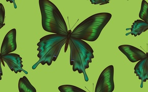 Picture butterfly, background, texture, texture, background, butterflies