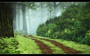 Picture road, forest, grass, trees, fog, the bushes, Redwood Walk