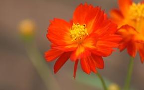 Picture macro, red, Wallpaper, petals, stem