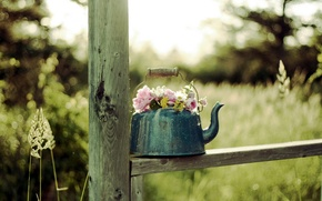 Picture flowers, background, kettle