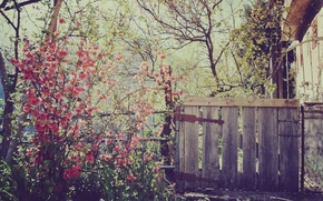 Wallpaper flowers, nature, house, the fence, spring, wicket