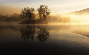 Picture trees, fog, lake, morning