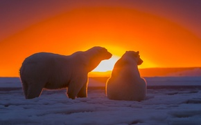 Picture the sky, snow, sunset, bears, Antarctica, Polar bears