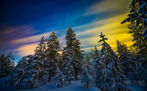 Picture snow, winter, Northern lights, trees, Finland, forest, Finland, Lapland, Lapland