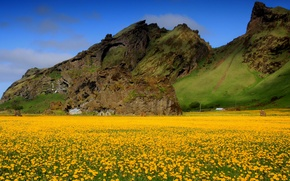 Wallpaper field, the sky, flowers, mountains, spring, valley, dandelions, yellow