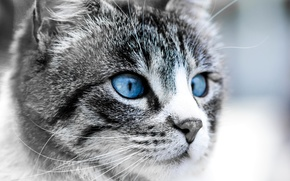 Wallpaper cat, blue, face, eyes, The moon