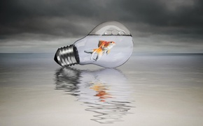 Picture style, background, lamp, fish