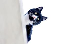 Picture cat, mustache, look, Kote