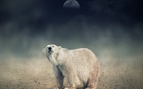 Picture white, night, the moon, bear, bear