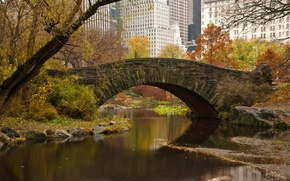 Picture leaves, trees, bridge, the city, home, spring, river, new York, new york