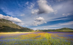 Picture field, clouds, mountains, field, multicolor, clouds, mountain, multicolor, field of flowers, fields of flowers