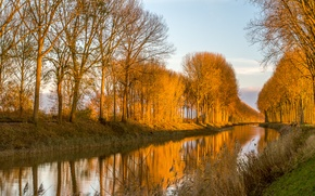 Picture light, trees, nature, channel