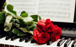 Picture notes, roses, keys, red, piano