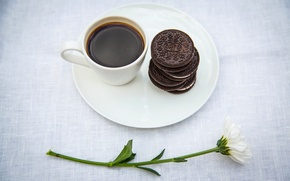 Picture table, Daisy, Cup, cookies, coffee, flower, saucer, oreo