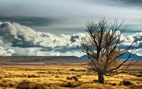 Picture the sky, clouds, mountains, the steppe, tree, new Zealand, new zealand