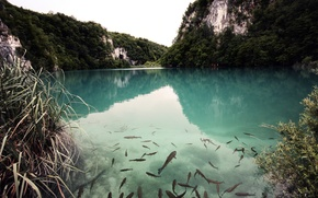 Picture forest, mountains, nature, lake, fish