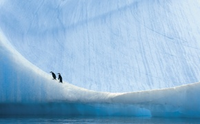 Picture nature, penguins, Antarctica