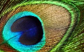 Picture macro, pen, patterns, texture, peacock