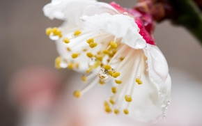 Picture flower, Rosa, drop, spring, petals, garden