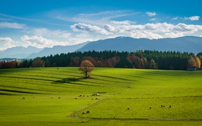 Picture clouds, tree, countryside, barn, farm, sunny, stove, cows, woodland, farmland, countryside scene