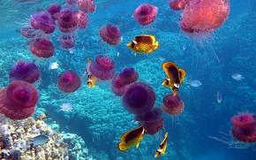Picture sea, fish, the ocean, corals, jellyfish, underwater world