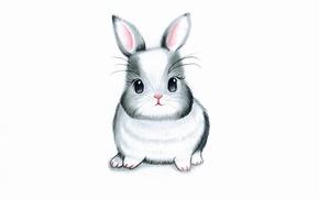 Picture hare, rabbit, white background, rabbit, bunny