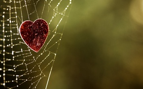 Picture background, heart, web, green